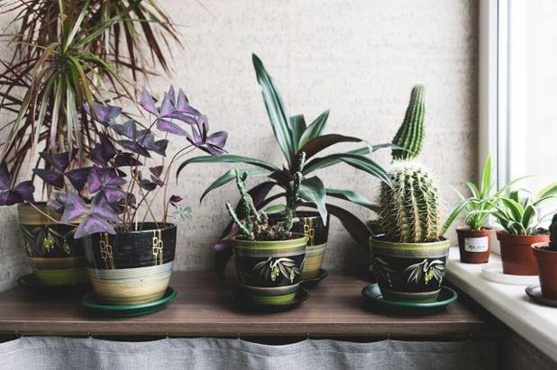 Сад на подоконнике. Как помочь растениям пережить зиму?