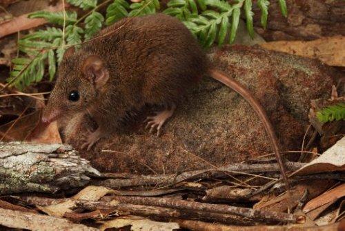 ТОП-10: Животные с особенно сильной тягой к саморазрушению