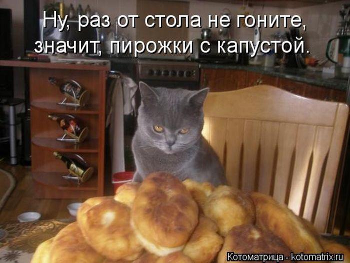 "Веселая ""котоматрица"""