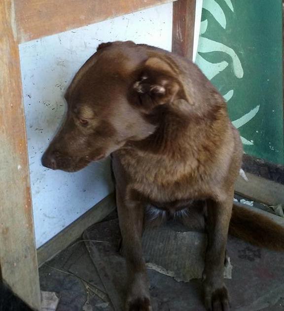 Печальная собака сидела в приюте 2 года, пока вдруг не почувствовала знакомый запах