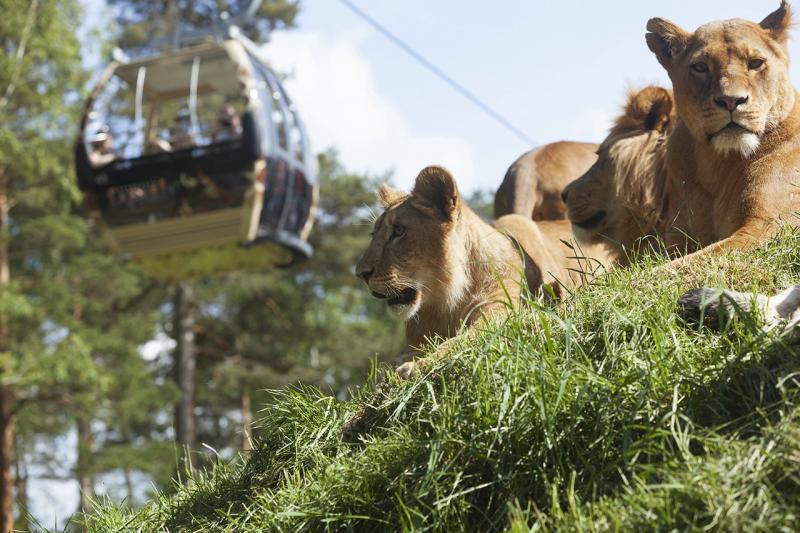 25 самых больших зоопарков в мире