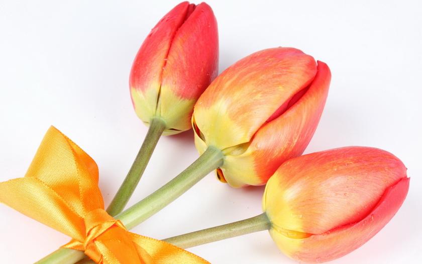 три тюльпаны, бант