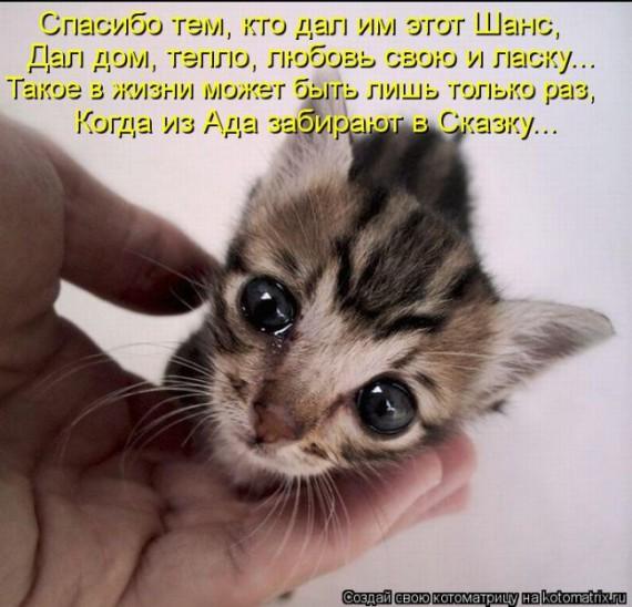 1359322228_1359093501_kotomatt (570x548, 79Kb)