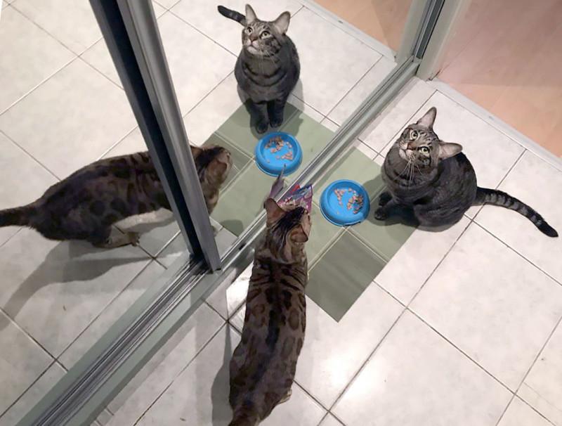 4 канонических совета о том, как правильно кормить домашних котов