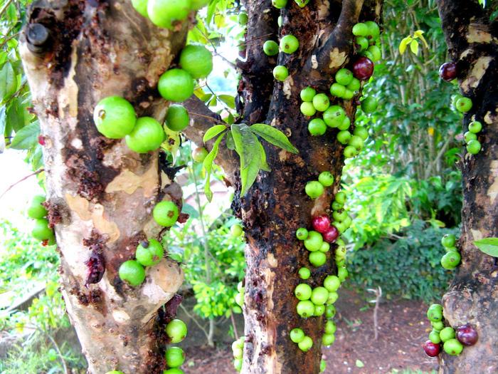 необычные деревья фото