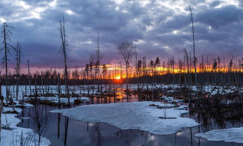 Болота ленинградской области, которые поражают своей красотой болото, природа, фотографии