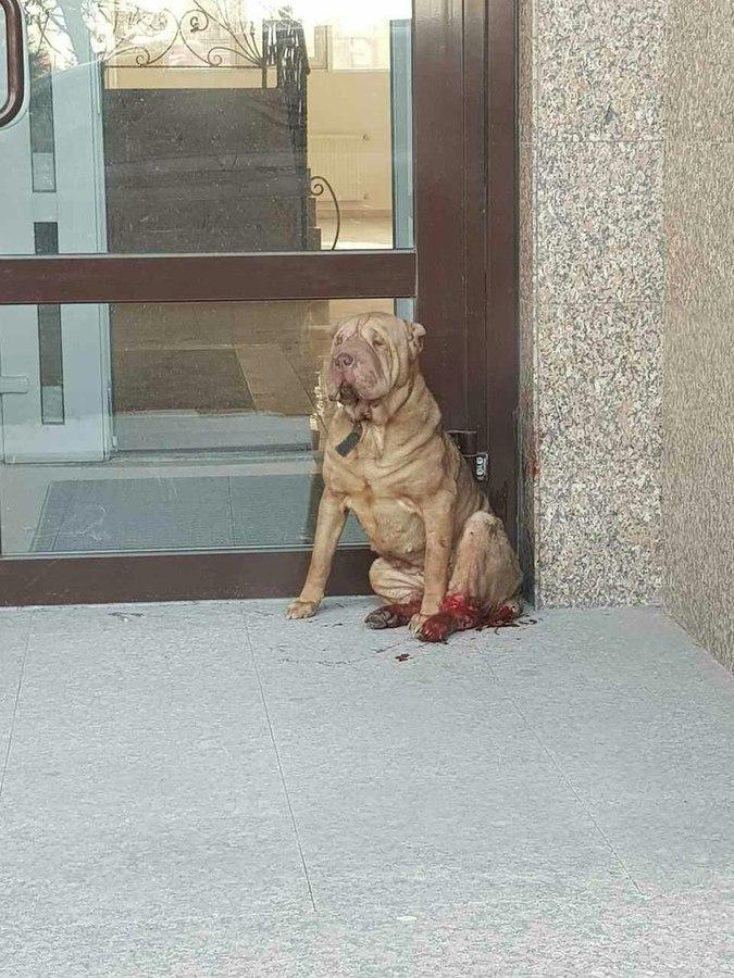 Женщина увидела на улице окровавленную собаку… Что с этим псом случилось? Если бы не она… Дай Бог ей здоровья!