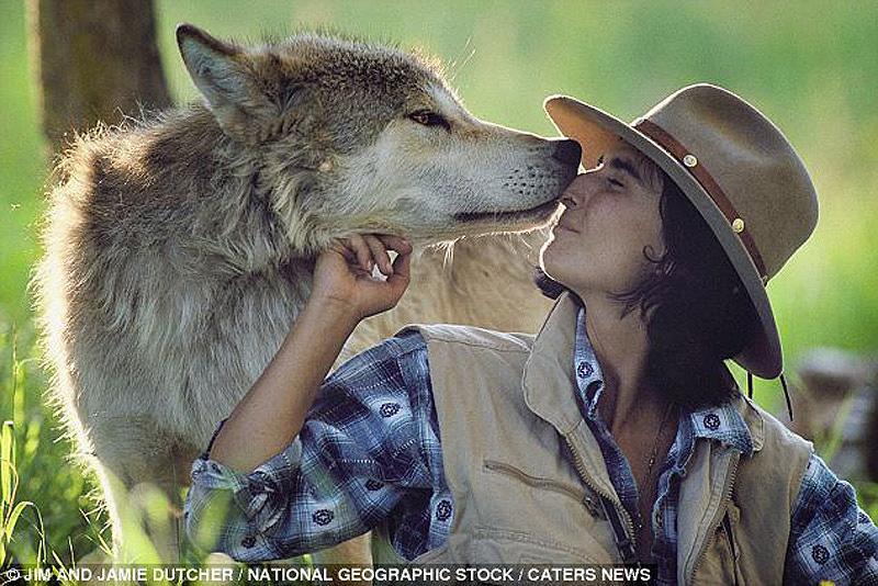 Зов предков – 6 лет с волками