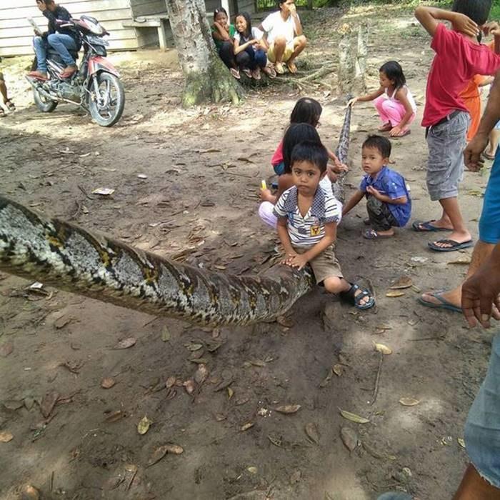 Мужчина сумел победить 7-метрового питона, нанёсшего ему ужасные травмы животные, змея, насекомые, питон, рептилия, травма