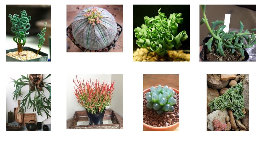 Комнатные растения, о которы…