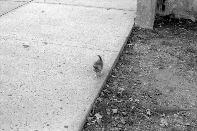Маленькие лапки бежали за человеком… Больная Марго молила о помощи!
