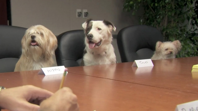 Big Lots Does Focus Groups With Animals Because They're People, Too