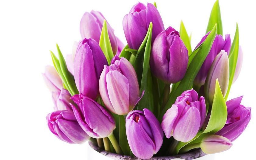 фиолетовые тюльпаны, букет