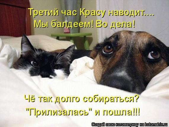 1359321481_96696242_large_3 (570x427, 73Kb)