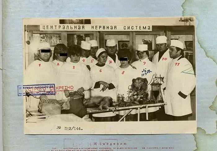 Секретный советский биоробот