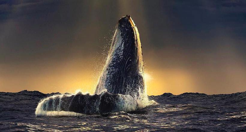 Незабываемые фотографии диких животных и пейзажей от Пепе Сохо