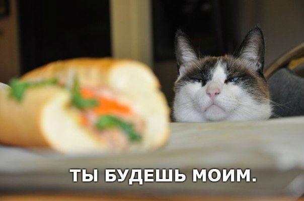 Кот прикол юмор
