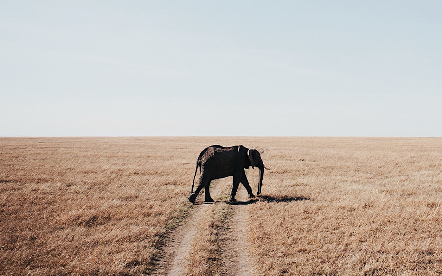 Elephant. Kenya.  by Tanner Wendell Stewart on 500px.com