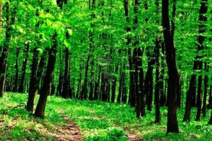 Один раз прочитал и в лесу не пропадёшь — 6 простых капканов для добычи пищи в лесу