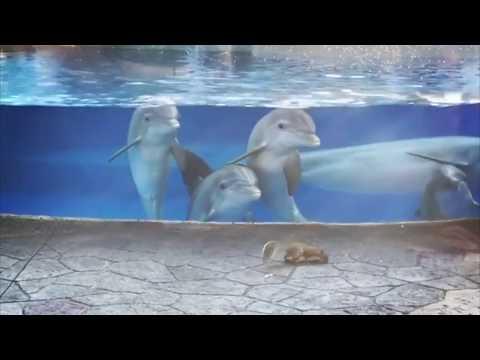 Дельфины встретили белок