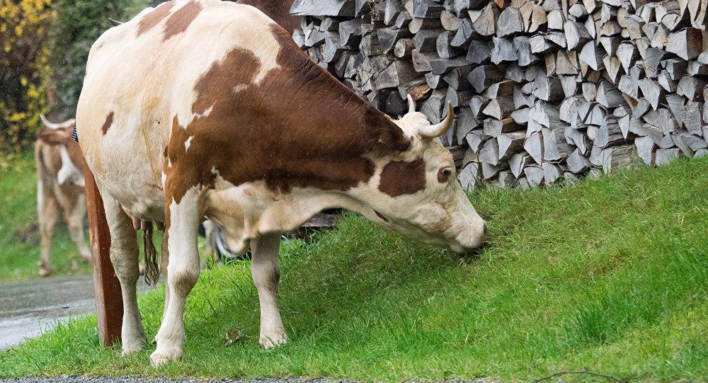 Виноваты санкции: фермы в Фи…
