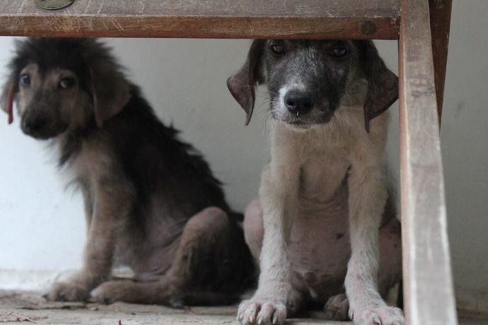 """""""Два облезлых щенка сидели, прижавшись к стенке…"""" Двухмесячные малыши не заслужили такой жизни"""