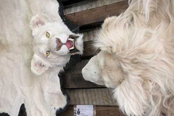 Охота как часть национальной культуры: в Екатеринбурге открылся Первый трофейный форум