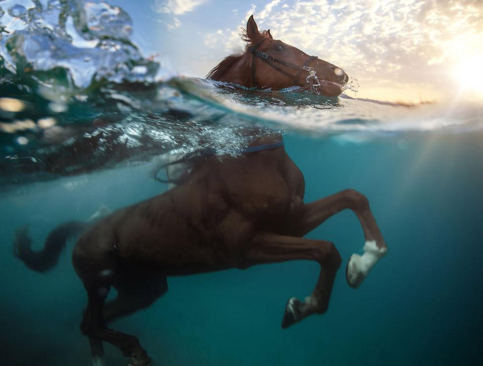 Необычные пловцы