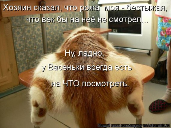 1359322029_1359093446_kotomatr (570x427, 69Kb)