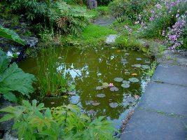Как почистить пруд на садовом участке