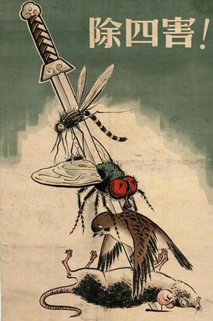 В 1958 году китайцы решили истребить всех воробьев, но природа жестоко отомстила им за это!