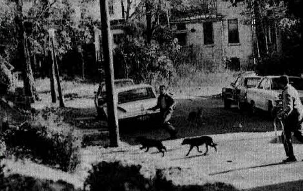 В СССР делали мыло из собак: было ли это на самом деле