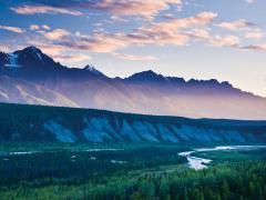 Отдавай-ка землицу Алясочку