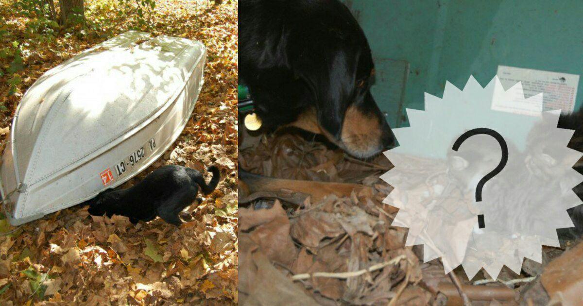Пёс учуял кое-что необычное под перевёрнутой лодкой… Без него эта находка осталась бы там навсегда