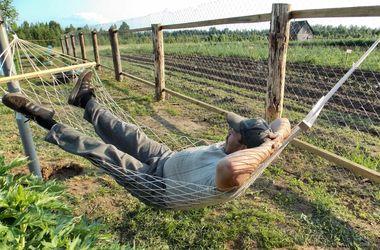 Дача для ленивых: как устроить свой огород так, чтобы на него уходило минимум сил