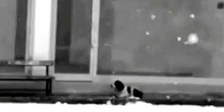 Собака замерзала на обочине… То, что сделал этот мужчина достойно уважения!