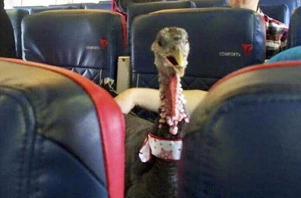 «Жутким» животным запретили летать в самолете