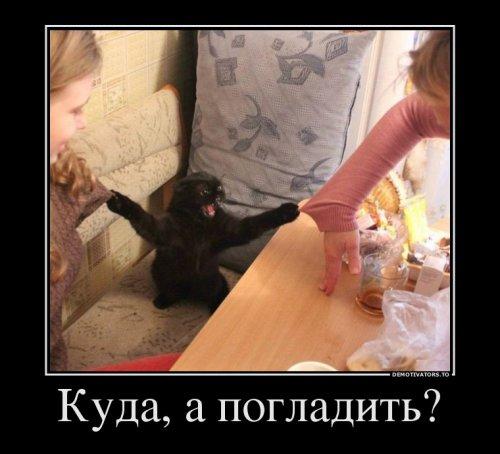 Картинки для настроения ч.3: фото приколы с людьми, животными