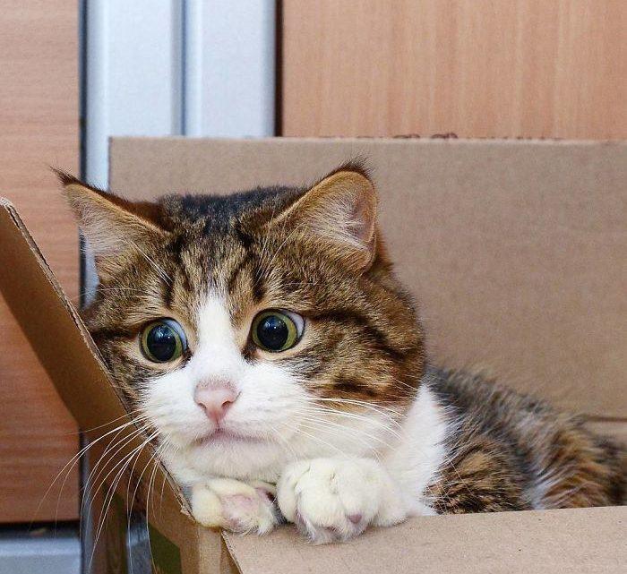 Котик Рекси — новый герой интернета