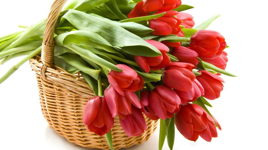 Тюльпаны, корзина, красные