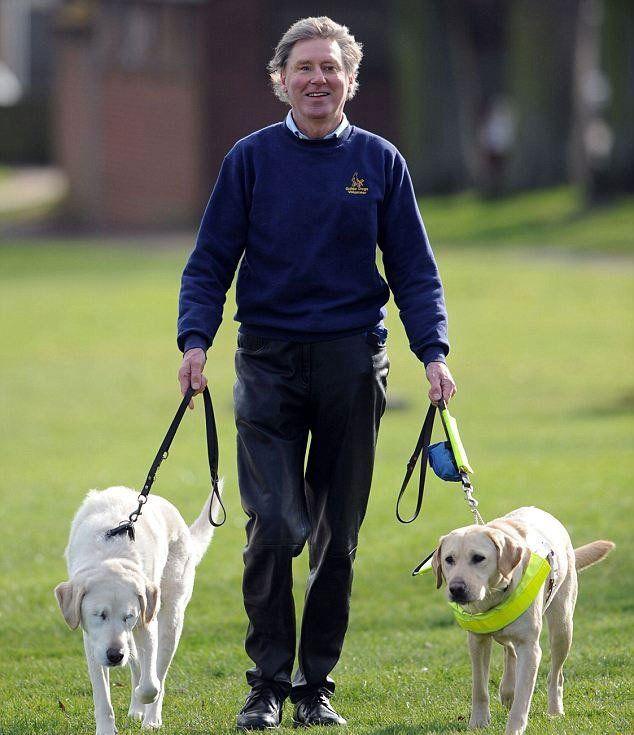 История пса-поводыря, который сам ослеп история, пса-поводыря, который сам, ослеп