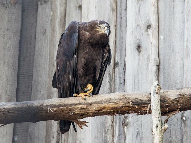 «Ночь музеев» стала стрессом для животных пермского зоопарка