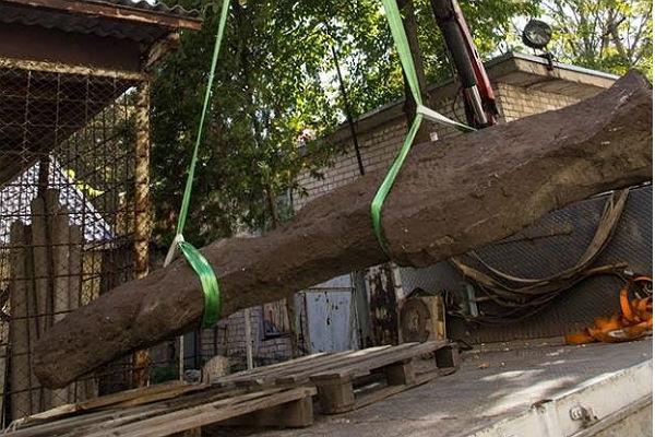 На Украине нашли огромный крест, высеченный из статуи воина-половца