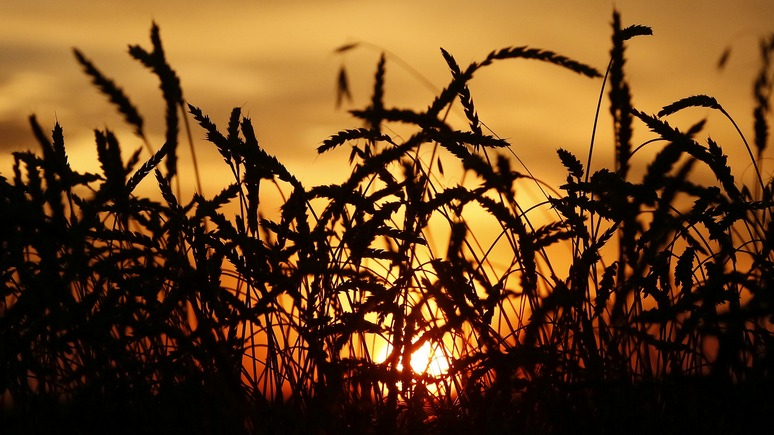 Tages-Anzeiger: Россия становится мировой житницей на горе американским фермерам