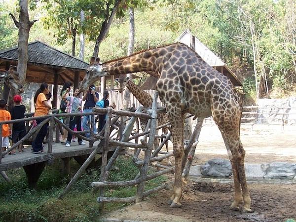 Зоопарк Чианг Мая (Chiang Mai Zoo)
