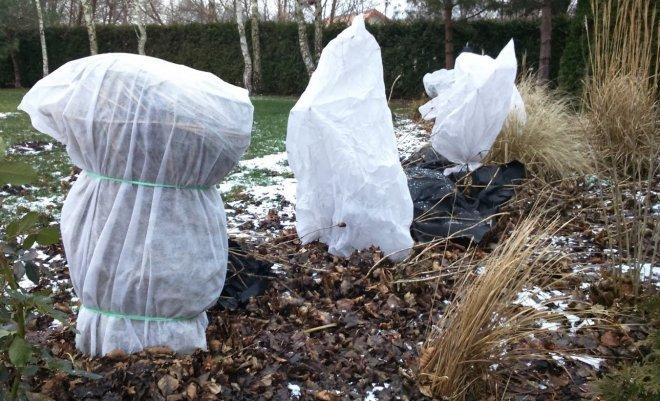 : Укрытие растений на зиму
