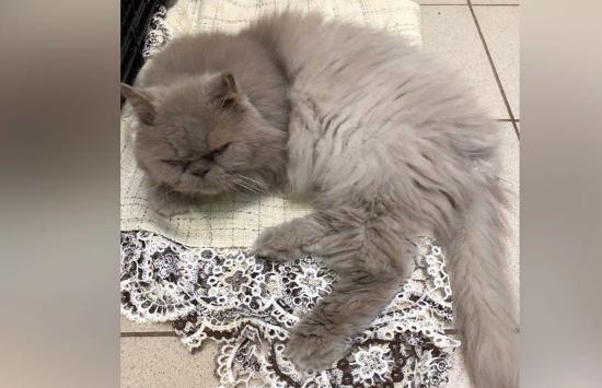 Еле мяукал: хозяева выбросили кота возле пермского аэропорта ради отпуска