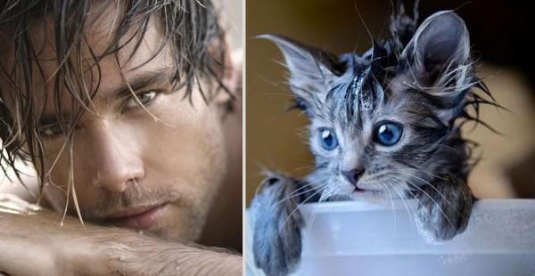 Дамы, кто вам больше нравится: красивые мужчины VS милые котики (25 сравнений)