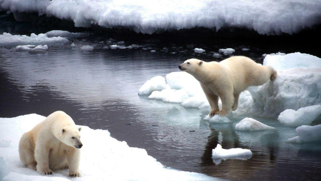 Трамп готов бурить Арктику: плевать на экологию, давайте бабки!