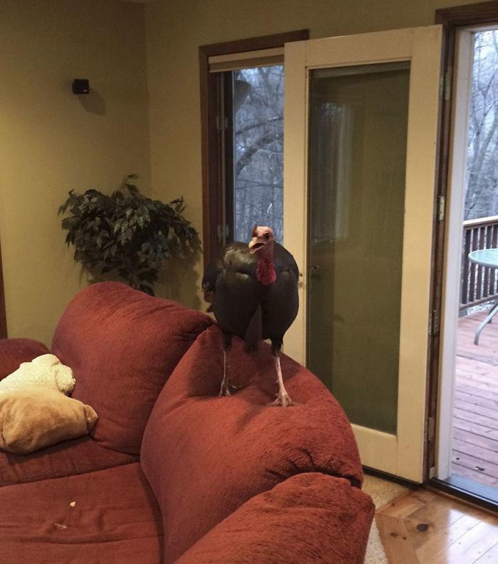 Видеосъемка нисколько не смущала птицу Миннесота, гостья, дом, животные, история, отпуск, семья, случай